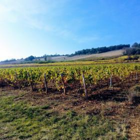 Randonnee charnay vigne